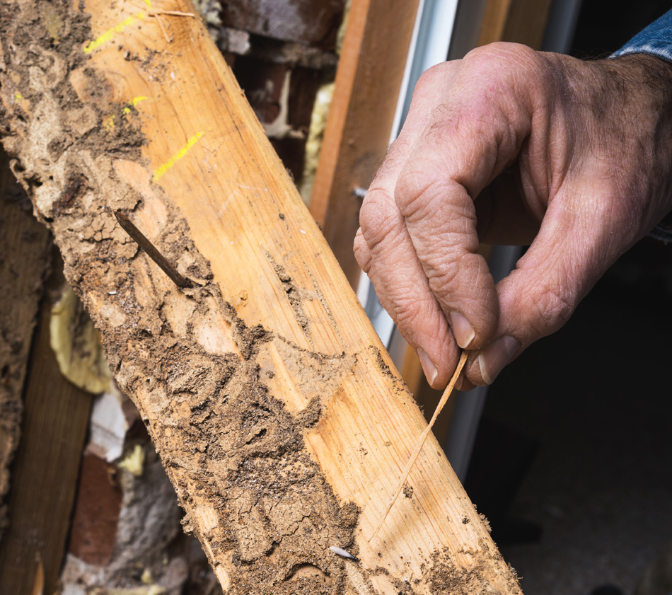 Free Termite Insepction
